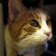 Хорошая новость: при пожаре выжила кошка Соня — любимица морских биологов