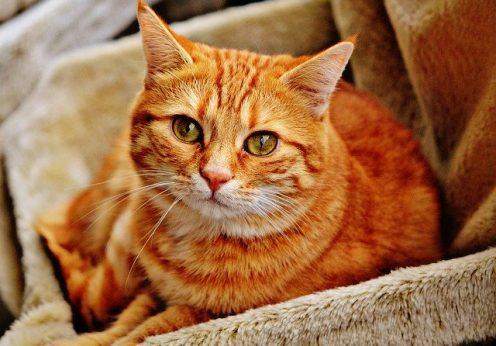 В Одессе принимают работы на онлайн фотовыставку «Коты»