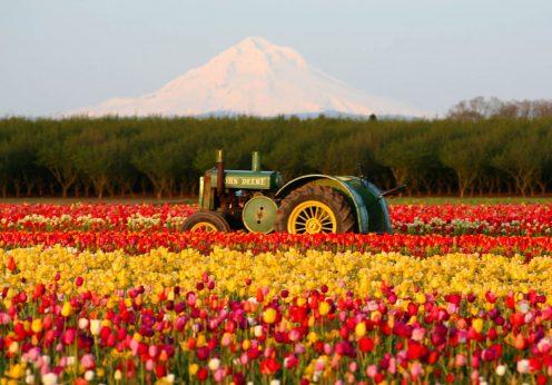 Закупка цветов оптом с плантаций! Где лучше закупаться?