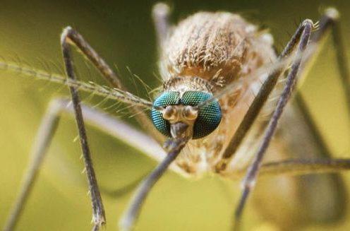 тропическая малярия