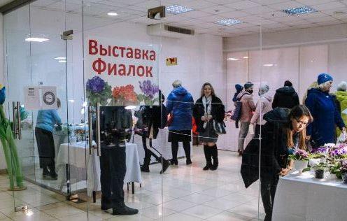 Выставка фиалок