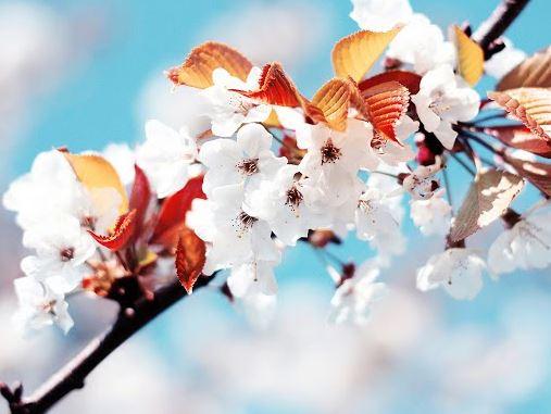 Майские праздники прогноз погоды