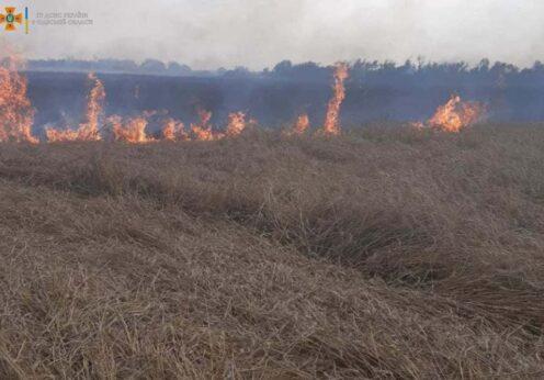 В Одесской области загорелось пшеничное поле