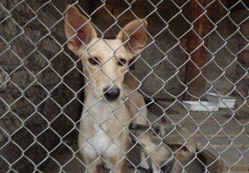 Одесский предприниматель с помощью чиновницы украл 700 тысяч грн вовремя ремонта приюта для бездомных животных