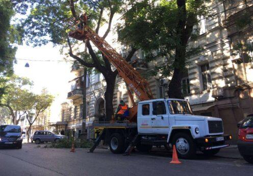 Обрезка деревьев по ул. Лейтенанта Шмадта в Одессе